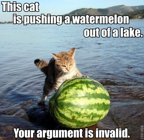 Cat, watermelon and lake