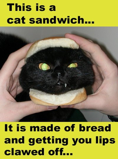 http://www.nastyhobbit.org/data/media/2/CatSandwich-001.jpg