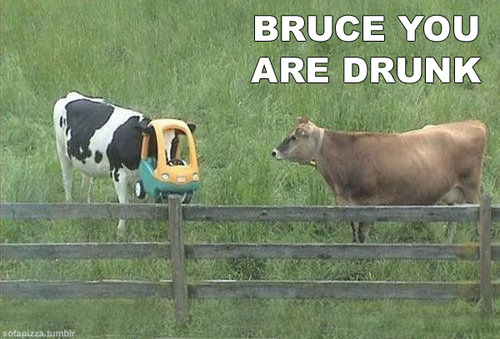 Bruce the cow