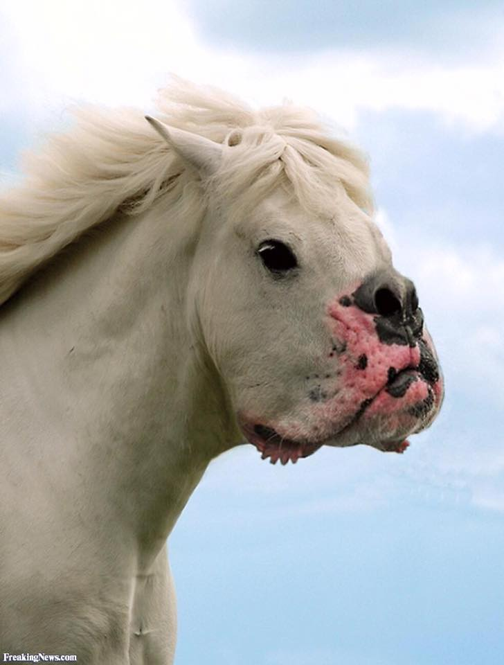 Horse with dog mouth 2