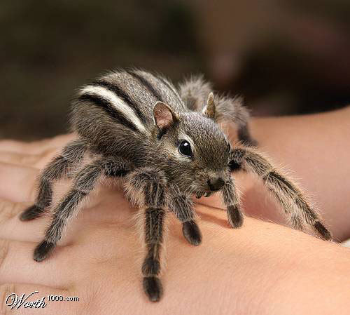 Spider Squirrel