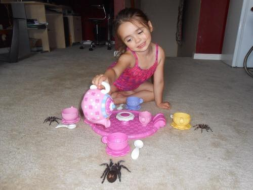 Spider tea party