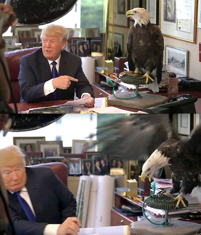 Bald eagle vs trump
