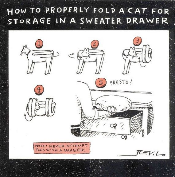 Cat storage instructions
