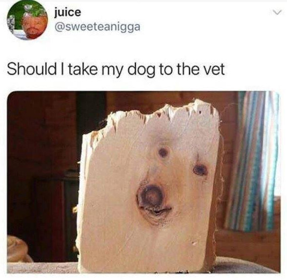 Should I take my dog to the vet