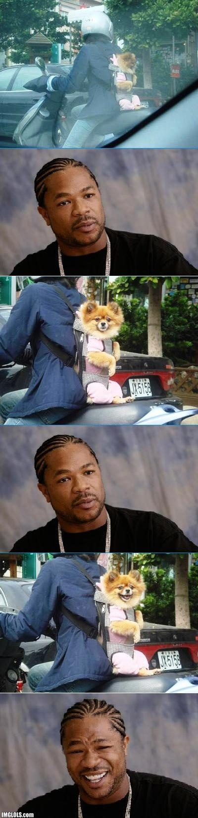 Xzibit vs Dog